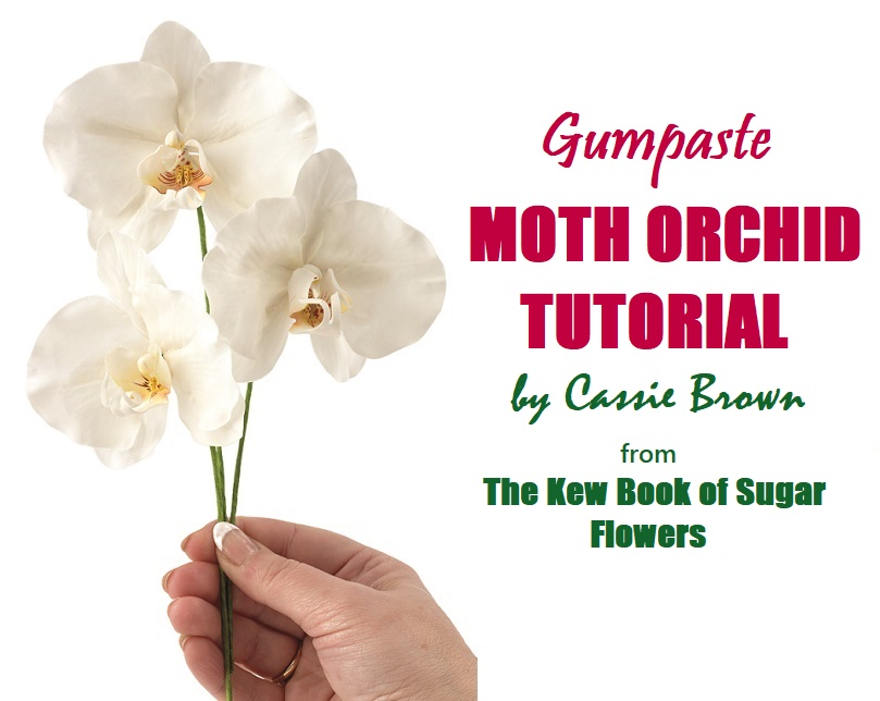Gumpaste Moth Orchid Tutorial on Cake-Geek.com from The Kew Book of Sugar Flowers by Cassie Brown - headline pic